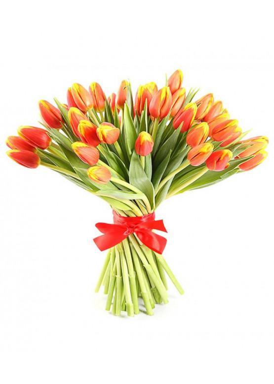 Тюльпан красно - жёлтый