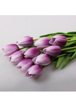 Тюльпан бело - сиреневый