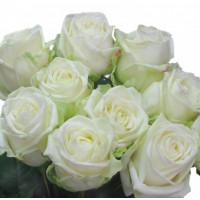 Роза Вайт Наоми (White Naomi) Белая 50 см