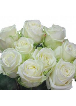 Роза Вайт Наоми (White Naomi) Белая 80 см