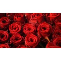 Красные Розы Ред Наоми (Red Naomi)