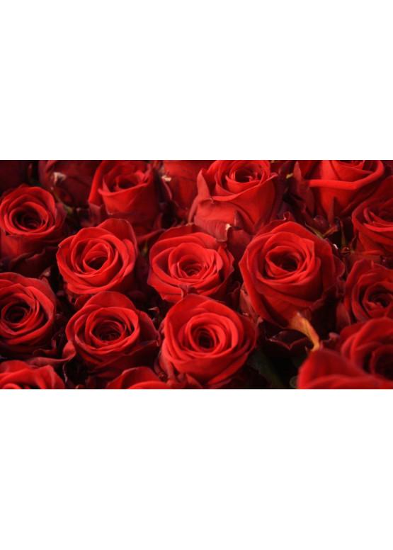 Роза Ред Наоми (Red Naomi) Красная 50 см