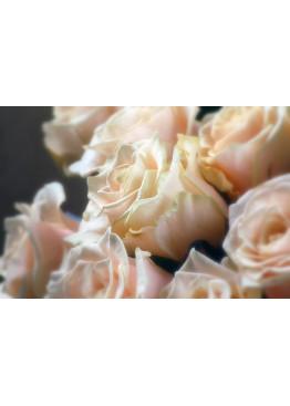 Роза Талея (Talea) Кремово-розовая 80 см