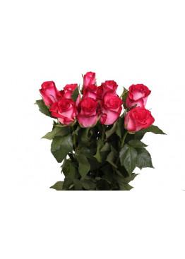 15 Роз Николетта 50 см (красная с белым оттенком )