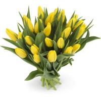 25 тюльпанов желтых