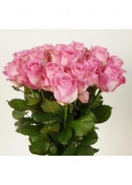 21 Бело-розовая роза Кэнди Аваланж (Candy Avalanche) 40см