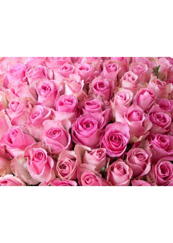 Роза Кэнди Аваланж (Candy Avalanche) Бело-розовая 50 см
