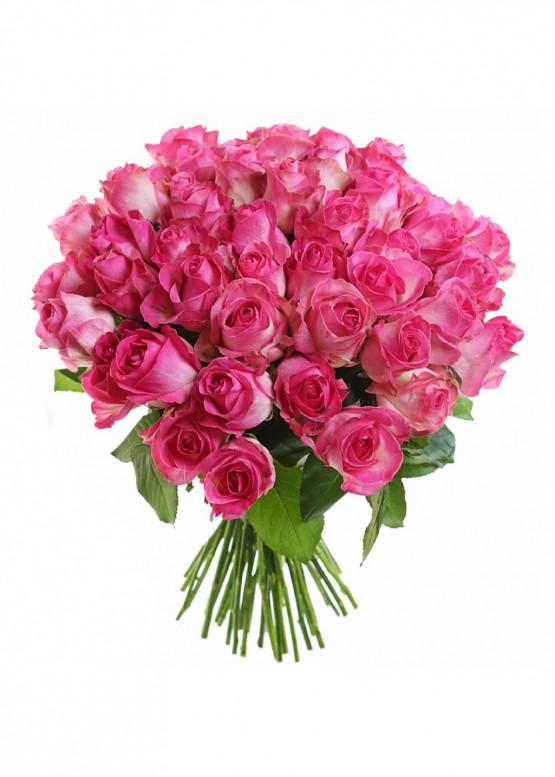 51 Бело-розовая роза Кэнди Аваланж (Candy Avalanche) 40см
