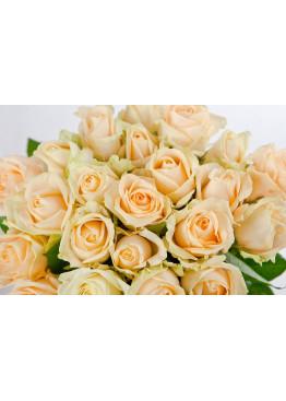 103 Кремовых роз Аваланж Пич (Avalanche Peach) 60см