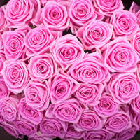 Роза Аква (Aqua) Розовая