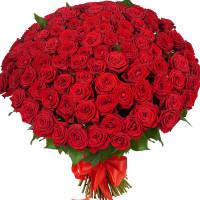 151 красная роза Ред Наоми (Red Naomi) 70см