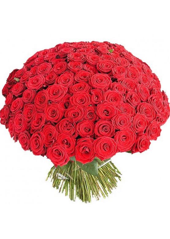 101 красная роза Ред Наоми (Red Naomi) 70см