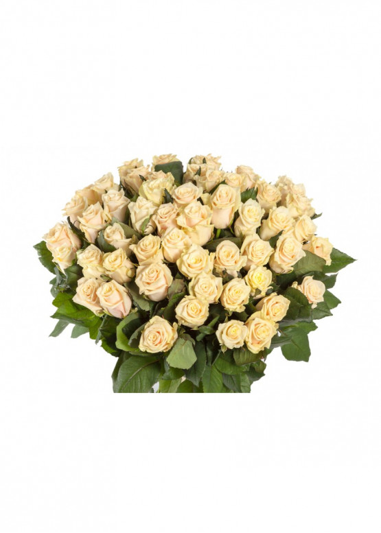 51 Кремово-розовая роза Талея (Talea) 40см