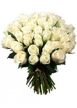 Роза Альба ( Alba) белая 60см