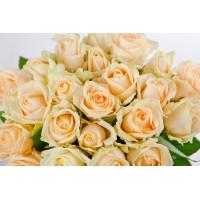 Роза Аваланж Пич (Avalanche Peach) Кремовая 40 см