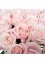 31 Бело-розовая роза Свит Аваланж (Sweet Avalanche) 60см