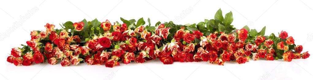 розы поштучно, по количеству: 51 роза, 101 роза